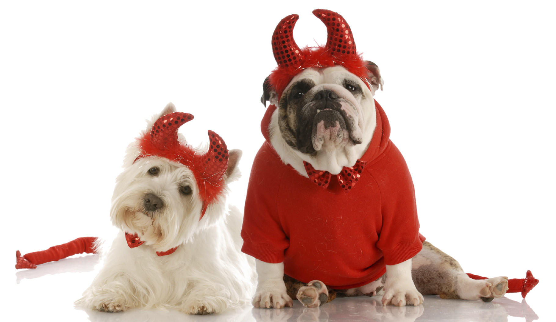 Pet costumes can be fun for humans, but animals don't always feel the same way. Make sure pet costumes don't impede breathing, movement, vision or hearing.