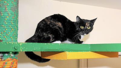 Fugitive feline up for adoption