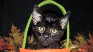 Adoptable Animals October 1, 2014 [Pictures]