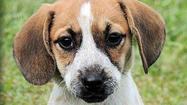 Adoptable Animals October 8, 2014 [Pictures]