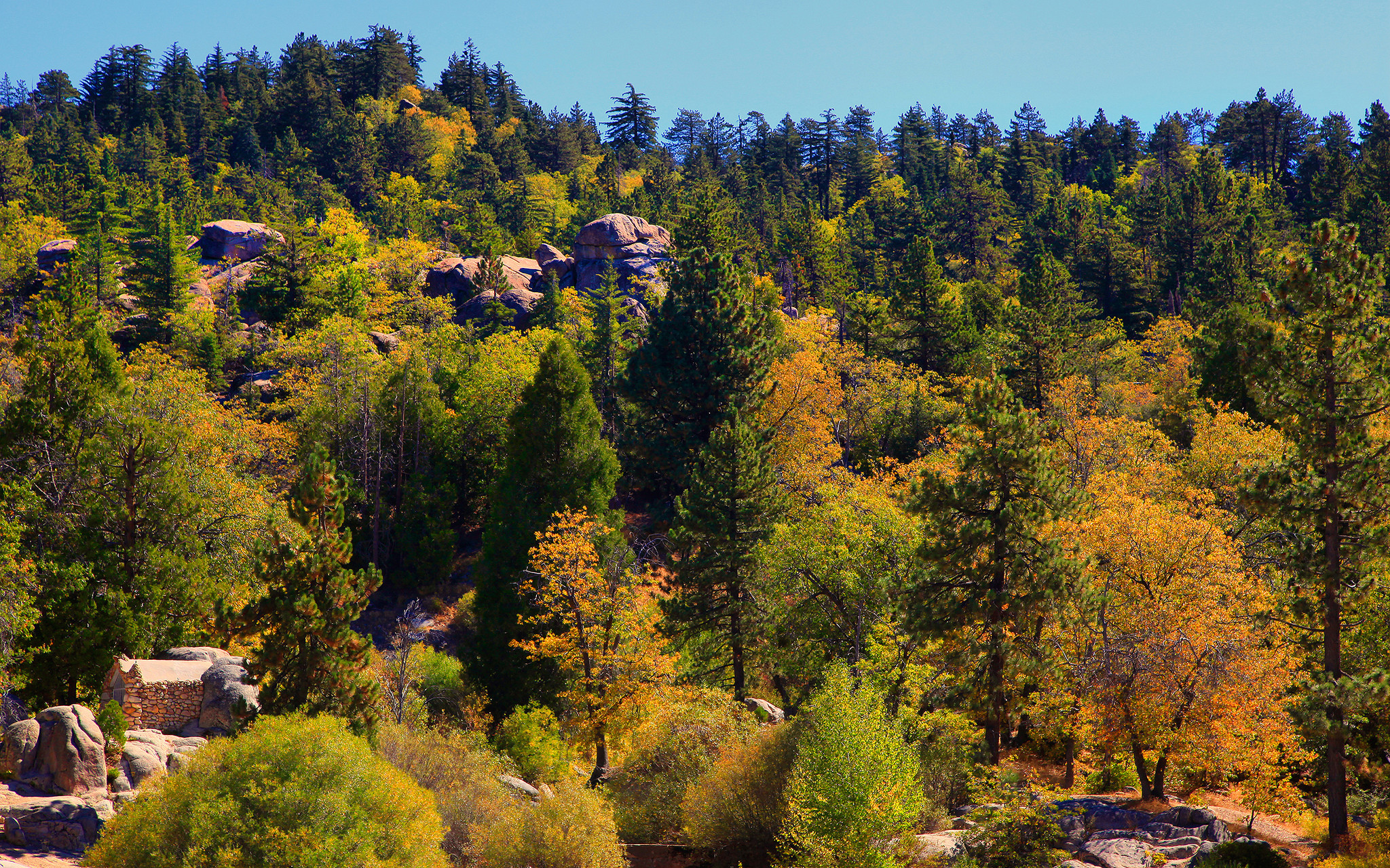 san bernardino mountains are best pick for fall colors this weekend la times. Black Bedroom Furniture Sets. Home Design Ideas