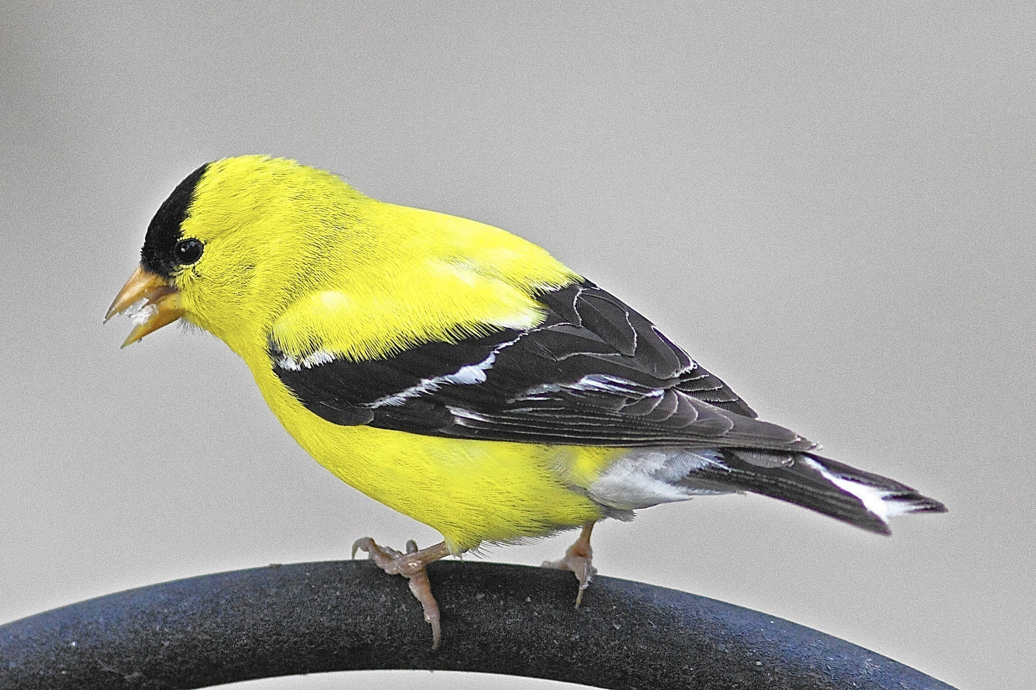 gardening column fall bird migration brings out the best in