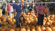 Photo Gallery: Pumpkin Patch Party