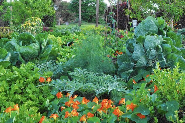 Mounts botanical garden 39 s fall plant sale is nov 1 2 in - West palm beach botanical garden ...