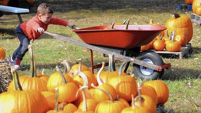 Pumpkin patches carve out good sales