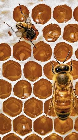 bees, beekeepers
