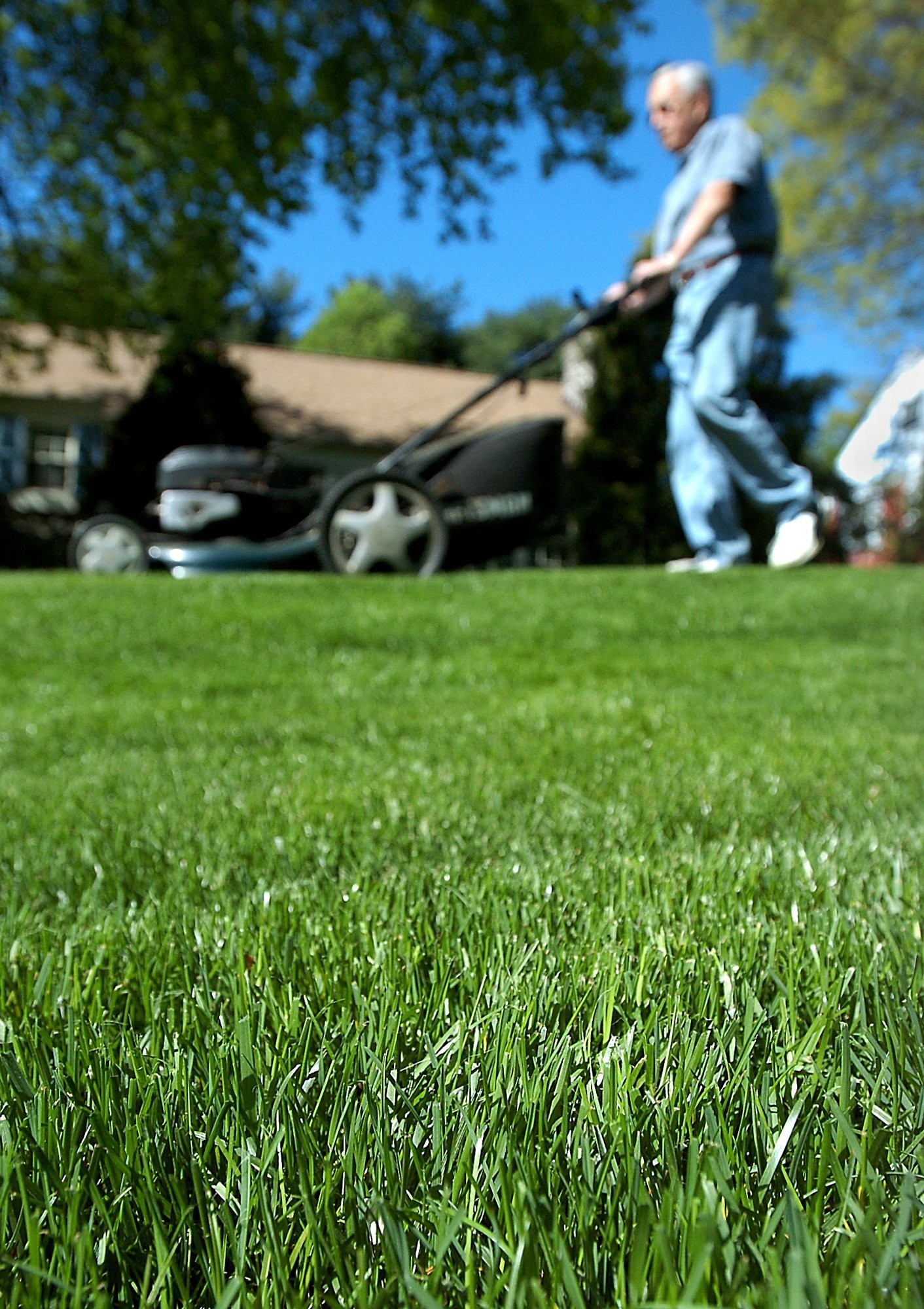 Garden Q A Cutting Your Lawn Short Can Be Beneficial In