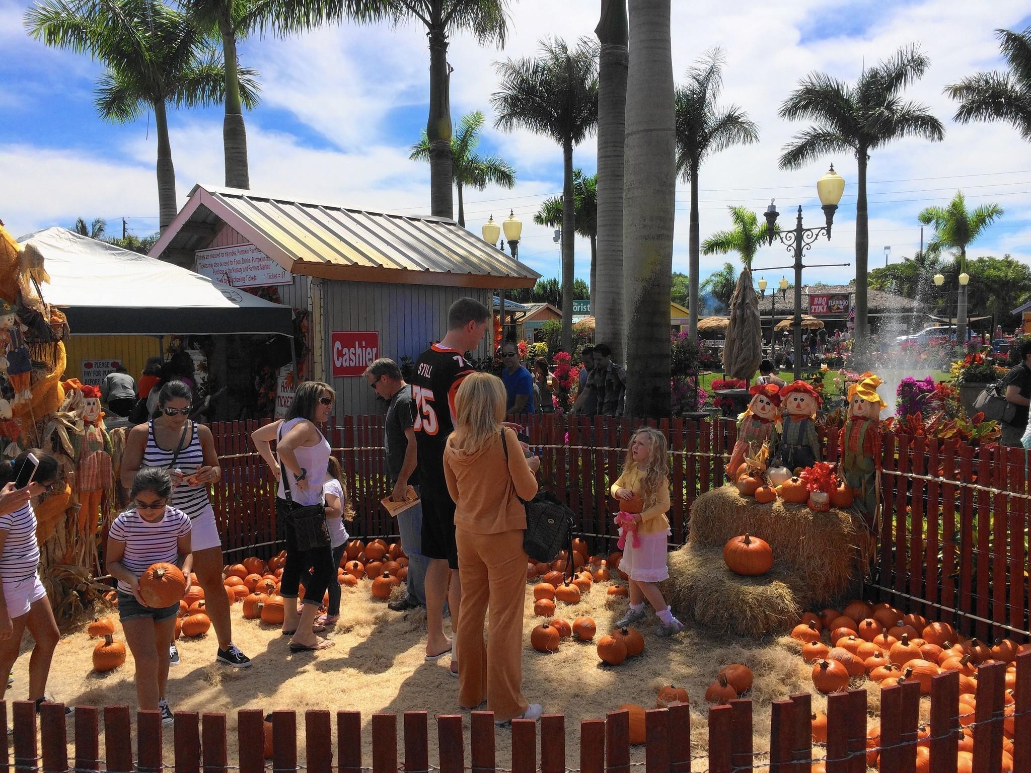 Davie S Flamingo Road Nursery Hosts Fall Harvest Festival Sun Sentinel