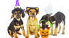 Celebrate Halloween with your furry friends