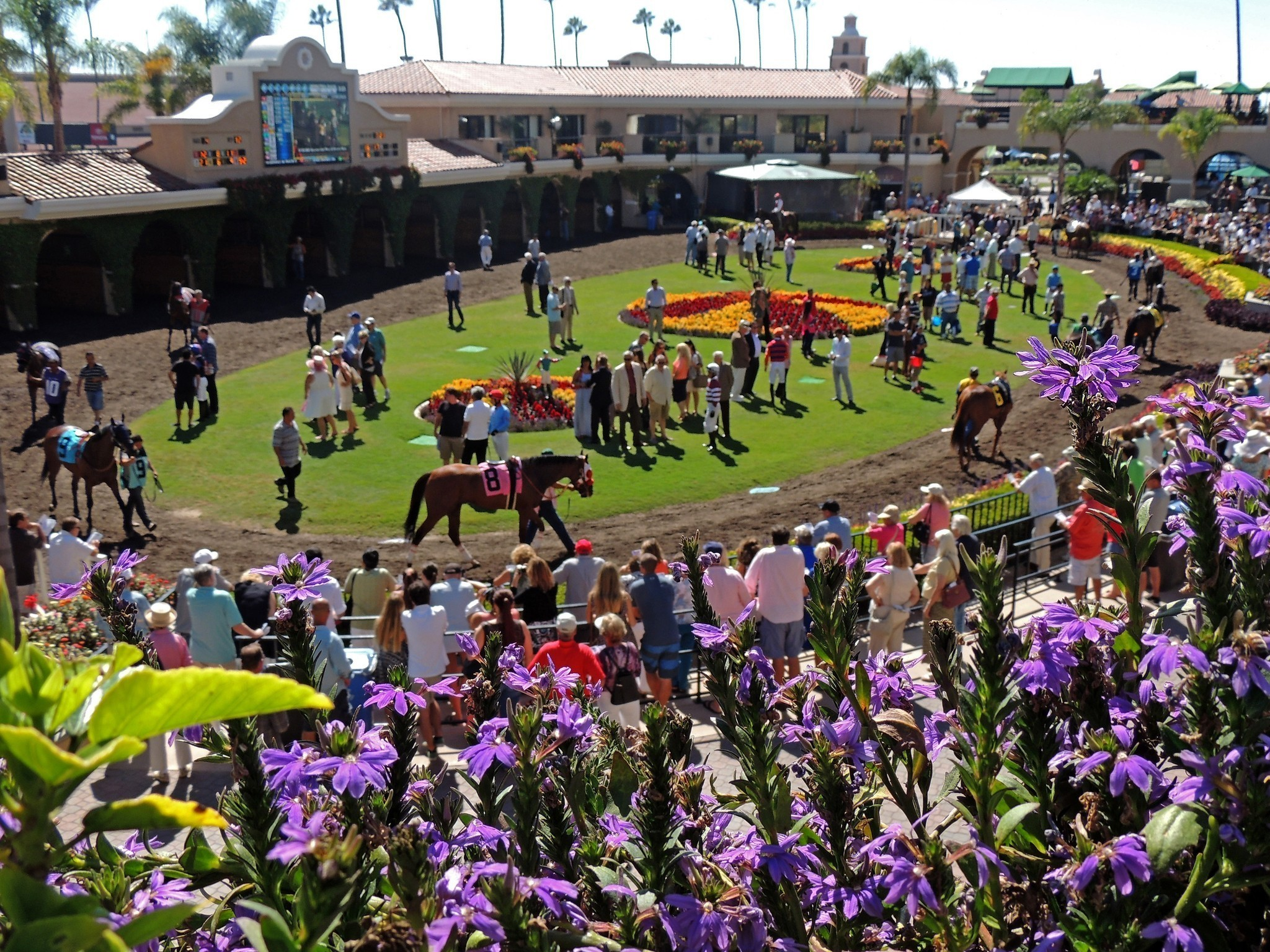 The dogs and horses are running in Del Mar, Calif.