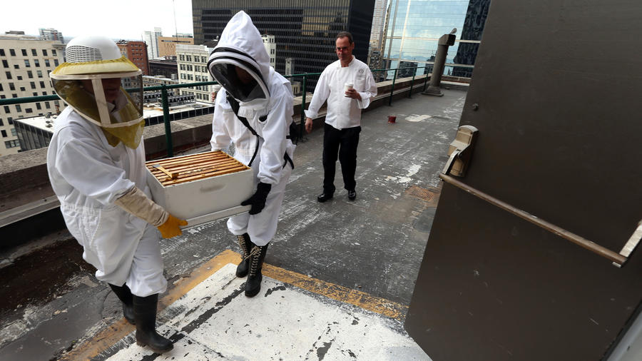 Removal of the honeycombs from the Palmer House rooftop