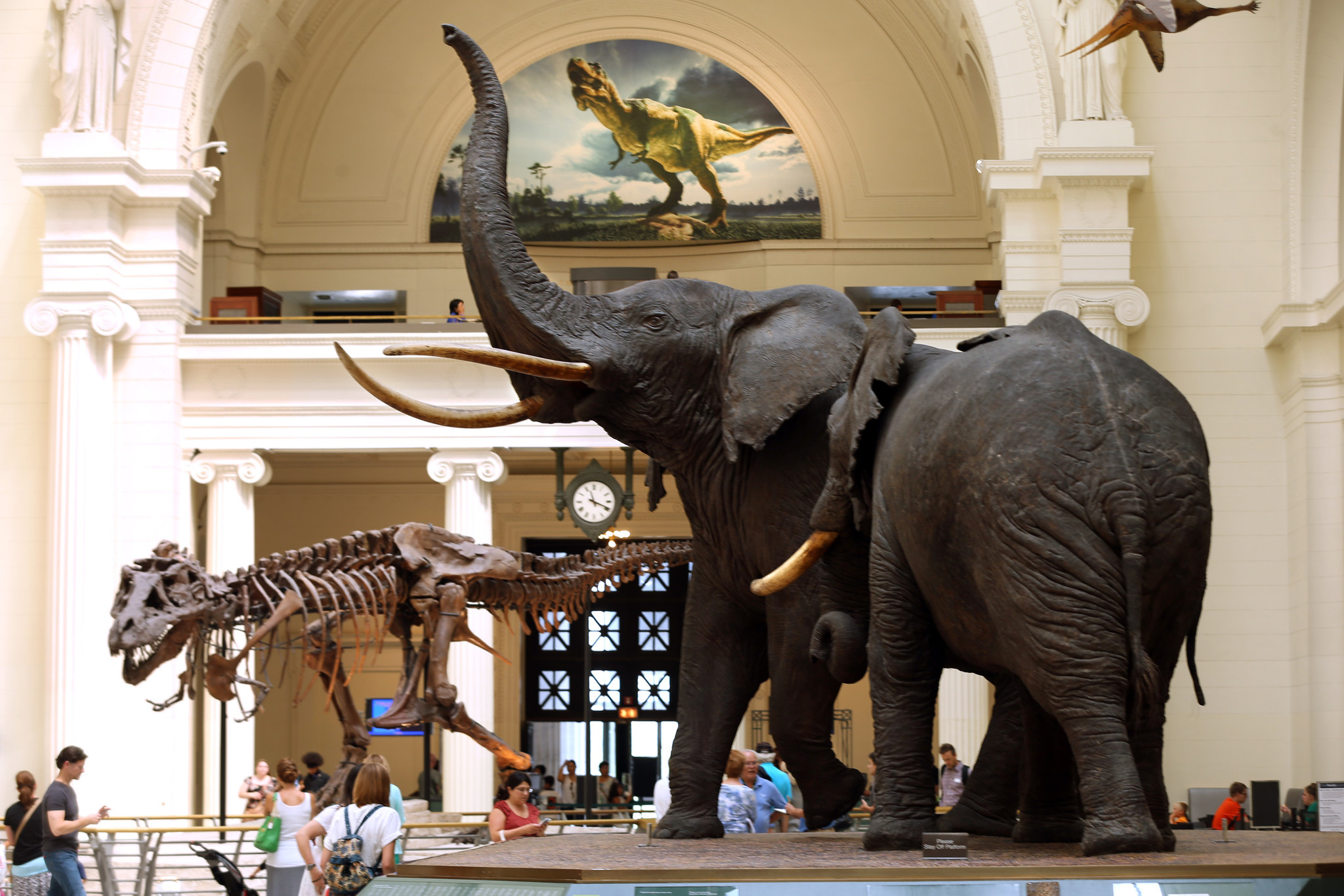 Field invites top natural history museums to Chicago summit