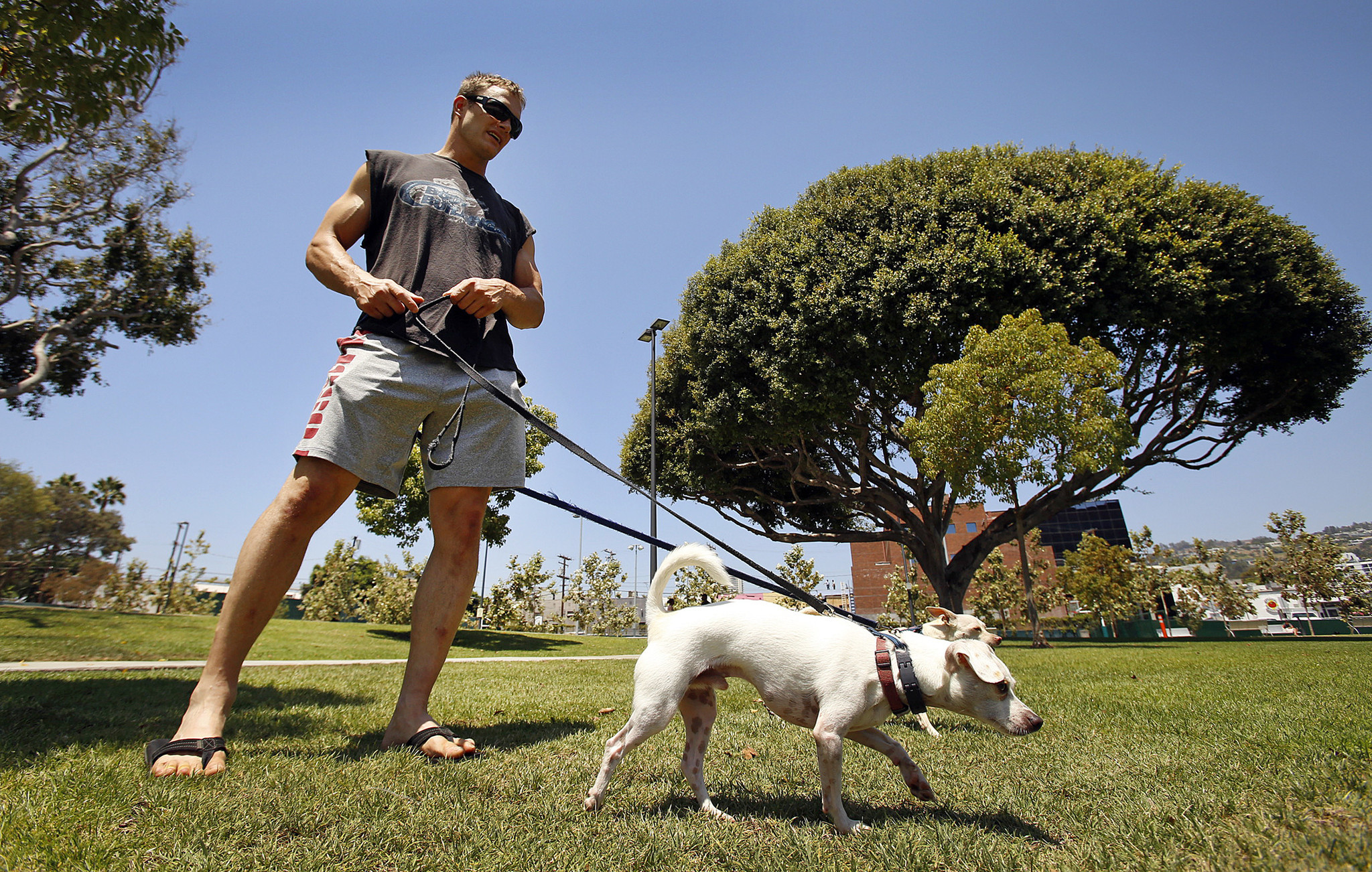 just how bad is your dog for the environment la times