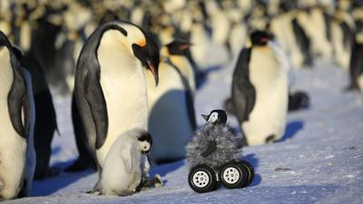 Rover disguised as penguin chick does research better than scientists