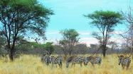 Kenya safari: Lions, giraffes, elephants, baboons. All before lunch.