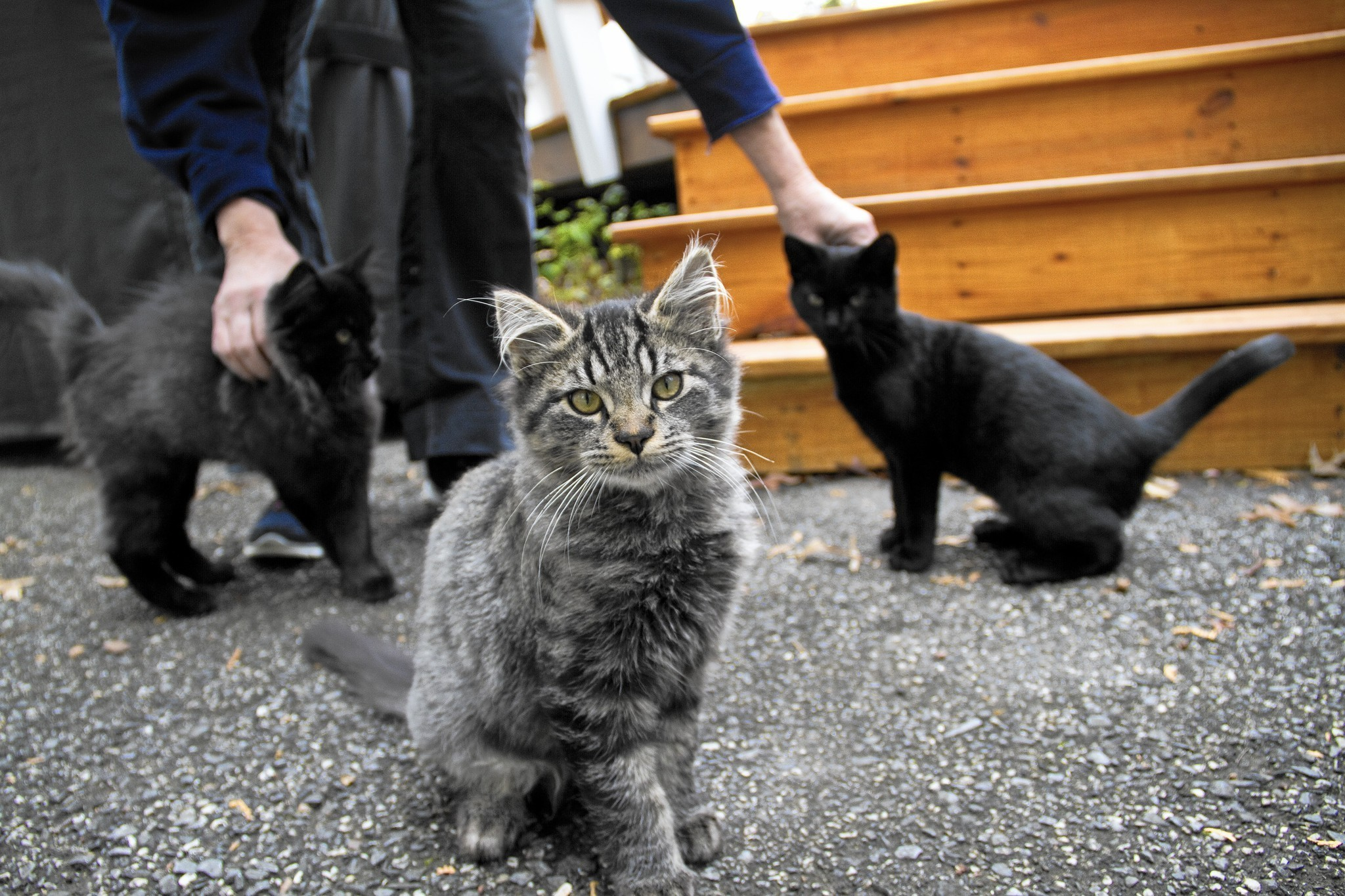 stray cat population becomes problematic for arbutus neighborhood