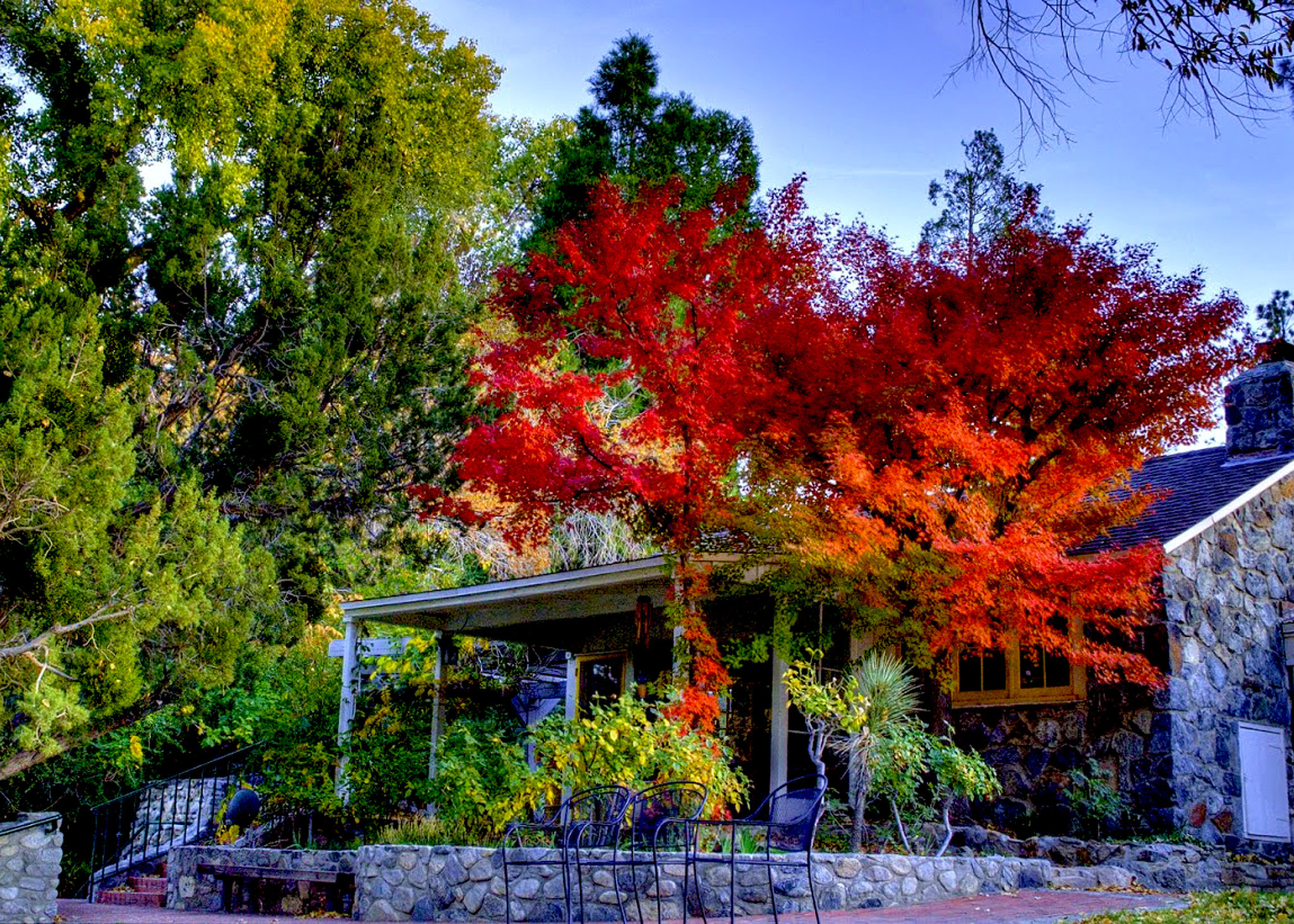 California fall colors: Easy L.A. getaway to Valyermo's red blush