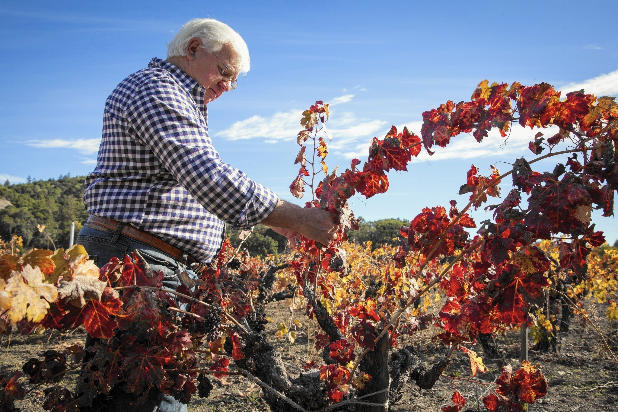 Drought revives 'forgotten art' at wineries: Farming without irrigation