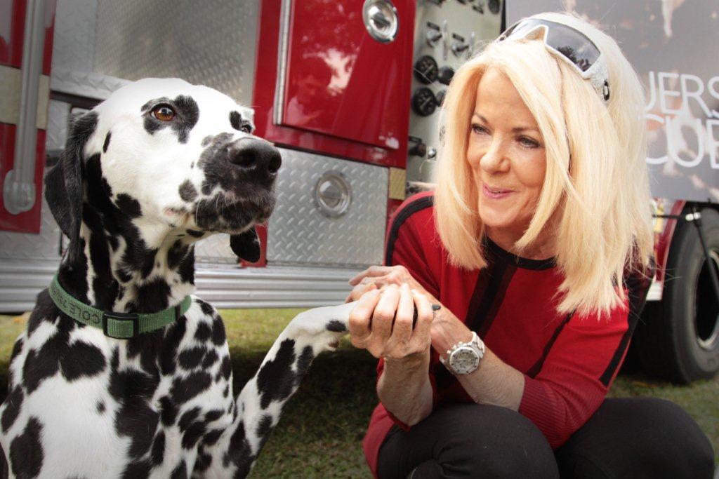 Dalmatian Rescue Palm Beach County