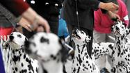 Northeastern Maryland Kennel Club's All-Breed Dog Show [Pictures]