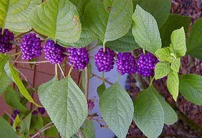 Gardening 12 plants for south florida gardens sun sentinel mightylinksfo