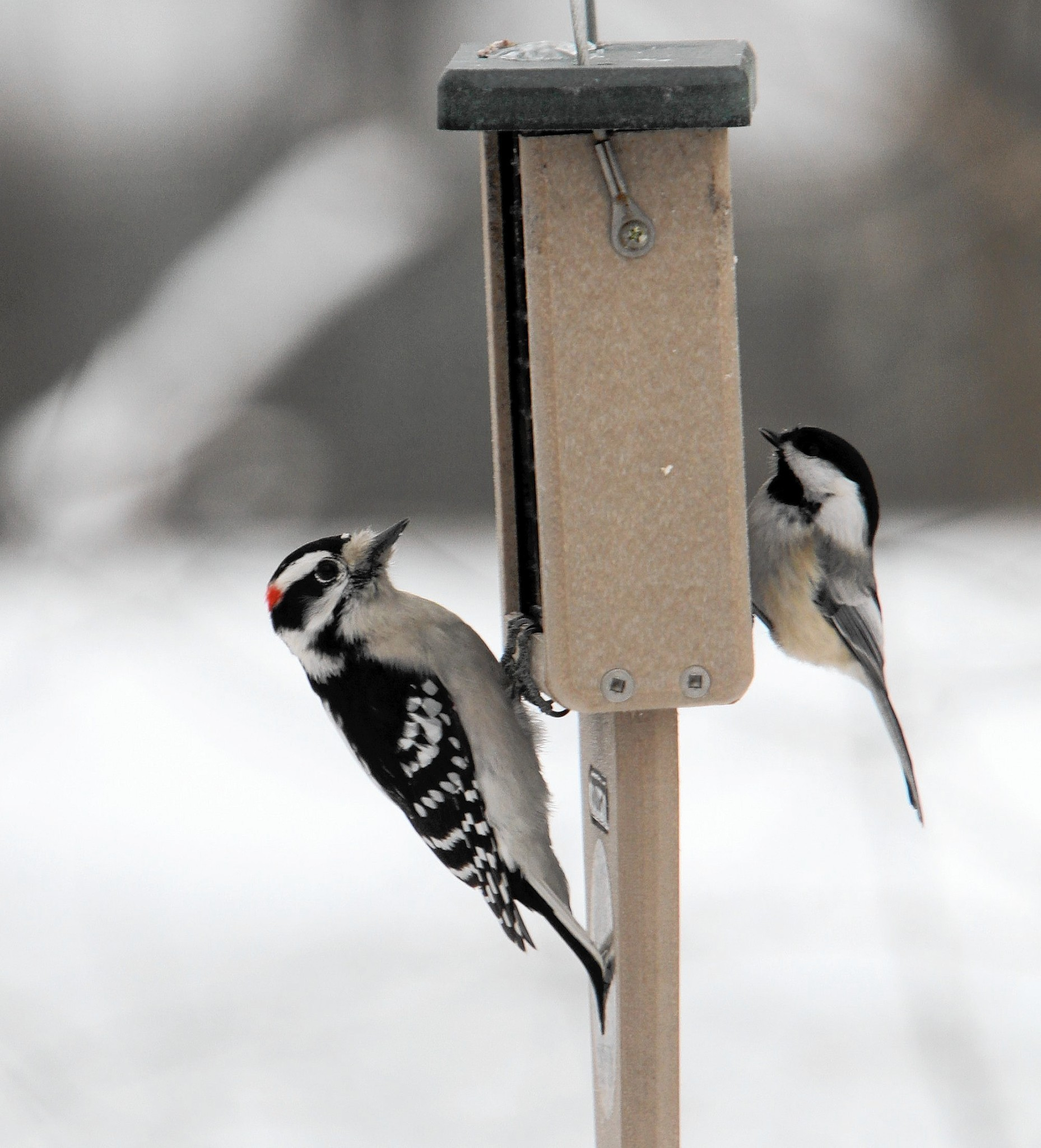 helping birds survive winter in your backyard chicago tribune