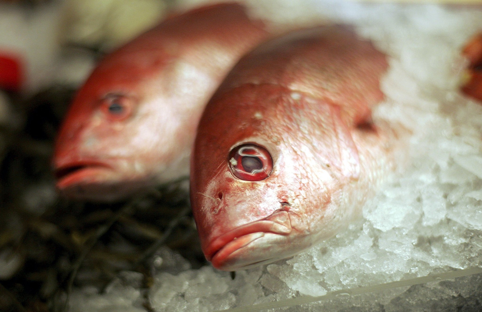 Mislabeled seafood the red snapper lie la times for Fish with least mercury