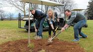 Planting projects: Tree initiatives embraced to help the environment