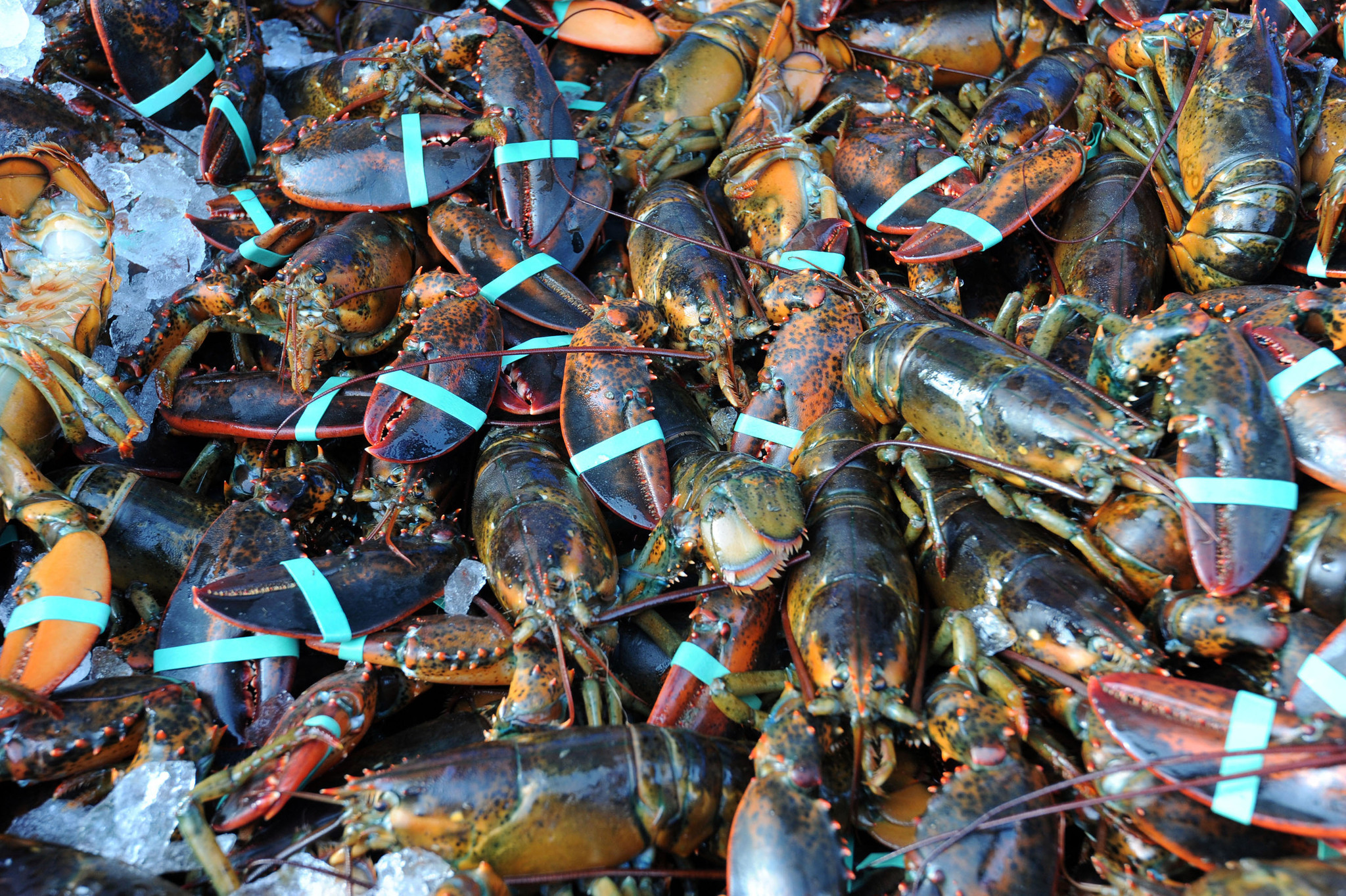 New u s recommendations aimed at stopping seafood fraud for Fish market maryland