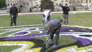 Ravens painting the city purple