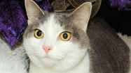 Adoptable Animals December 31, 2014 [Pictures]