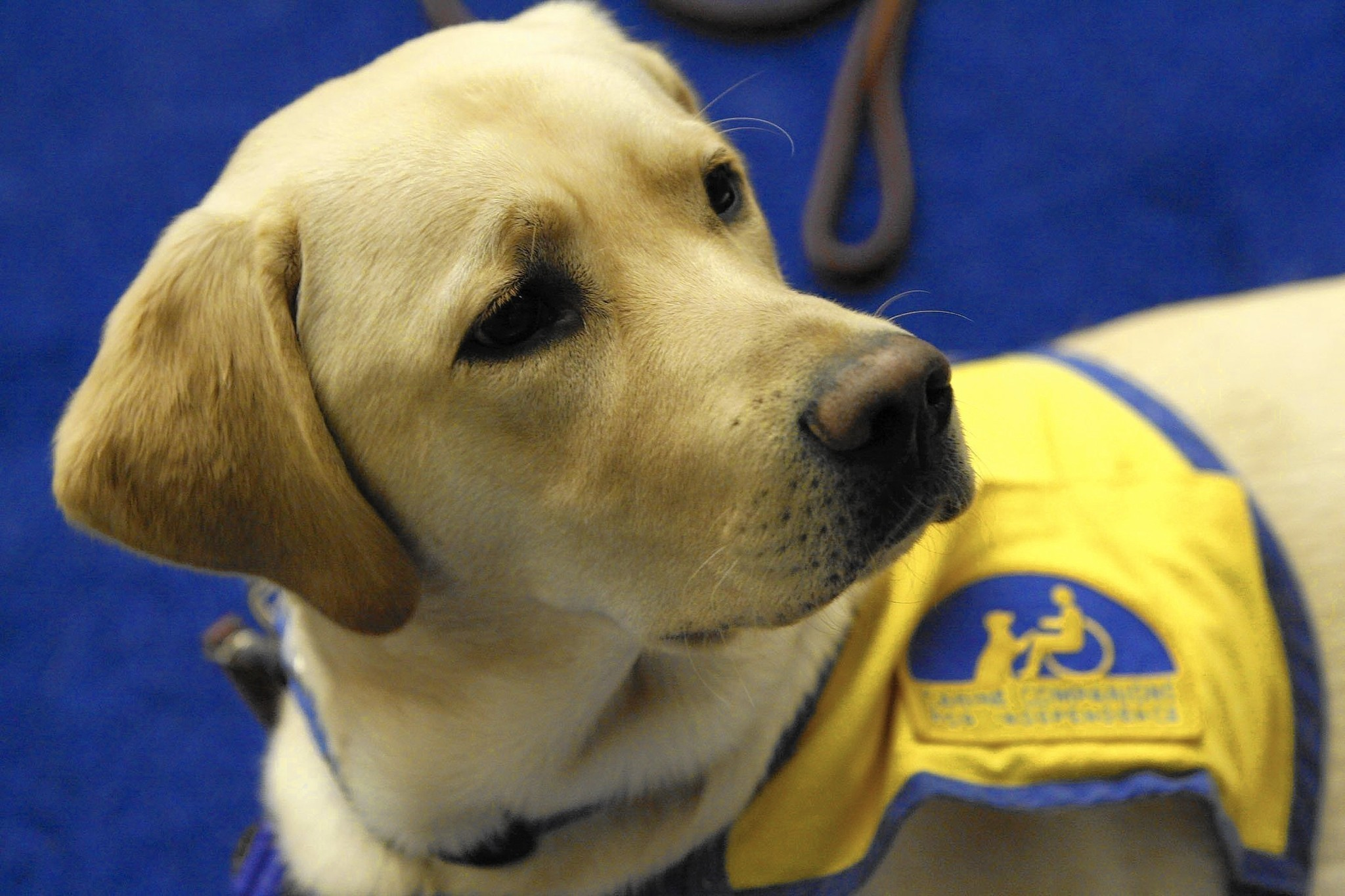 Abuse Of Service Dog Designation