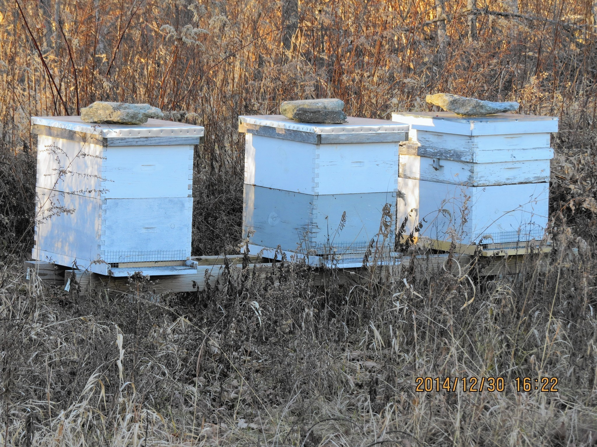 beekeeping schools efforts to preserve honeybees ramp up over the