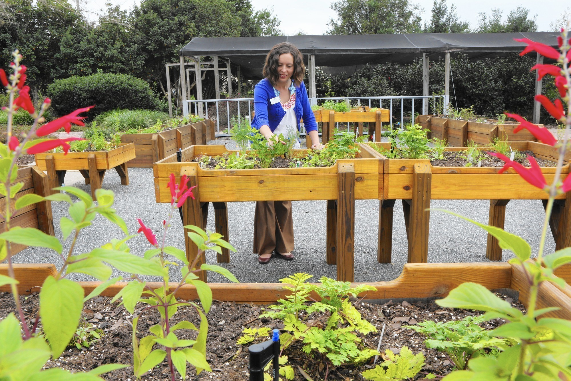 Ag Center Installs Wheelchair Accessible Herb Garden   Orlando Sentinel