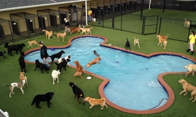 Board Dog Kennel Gainesville