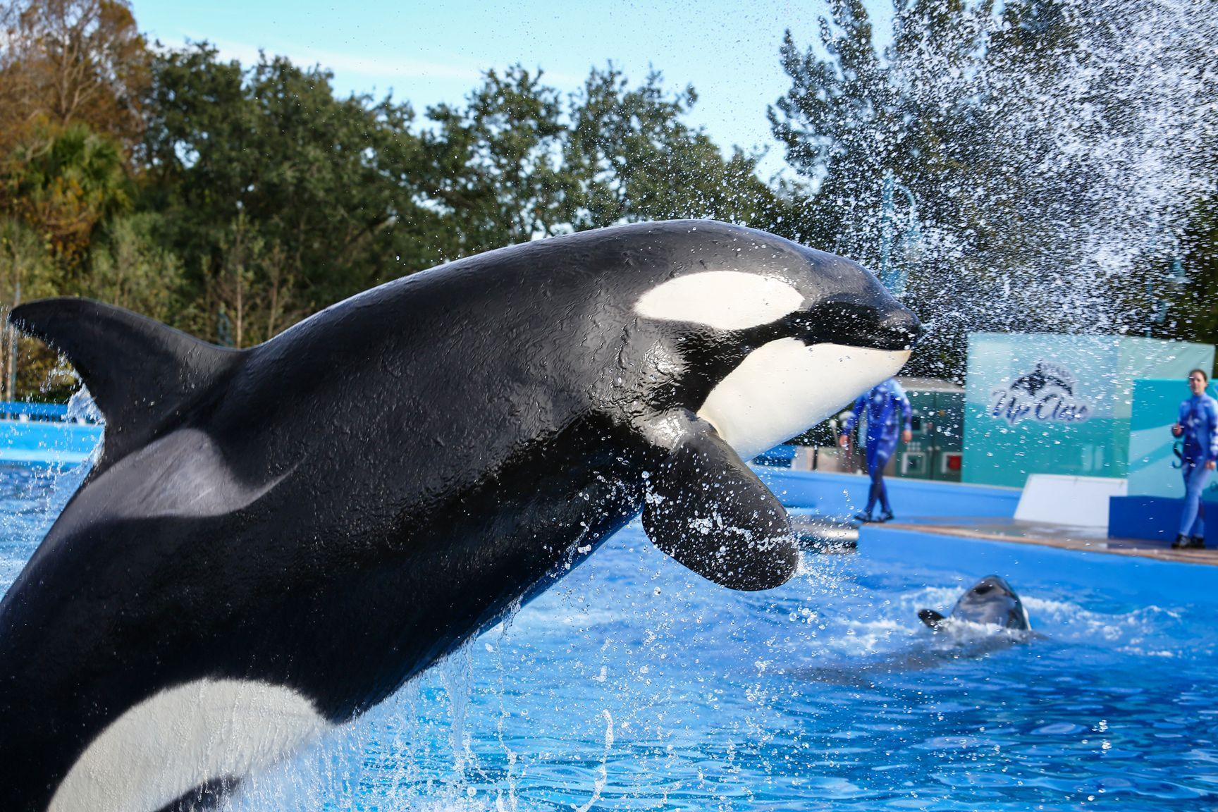 Swimming With Dolphins: Swim with Dolphin World - (800 ...