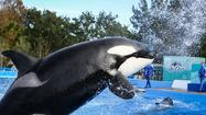 SeaWorld, Miami Dolphins end marketing partnership
