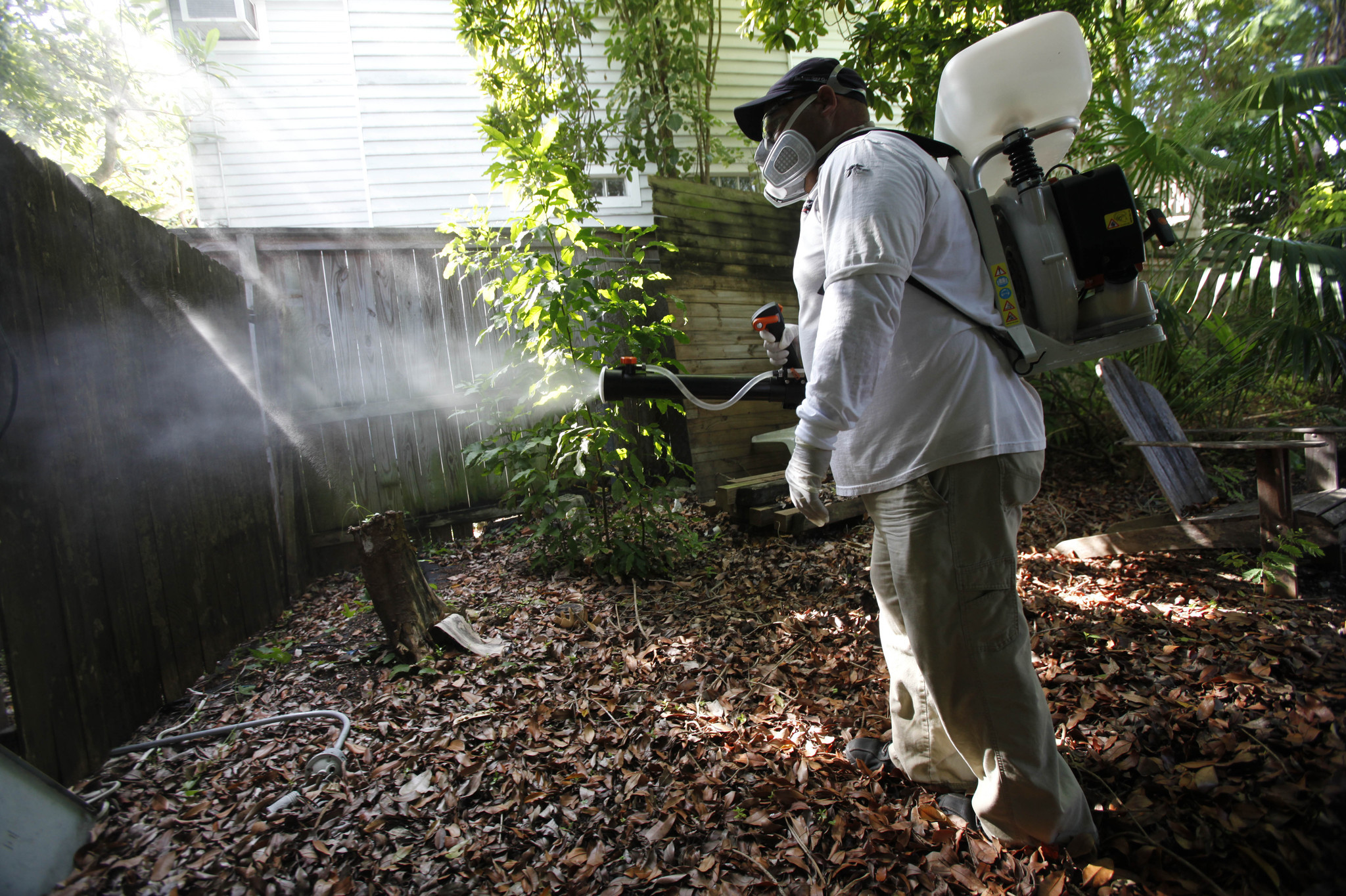 Florida Keys: Millions of genetically modified mosquitoes could be released to help combat viral diseases