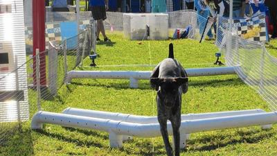 Canines party at Doggie Palooza