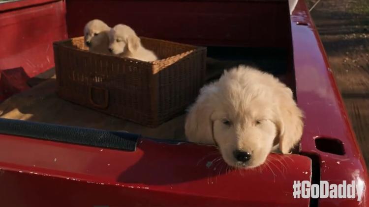 GoDaddy puppies
