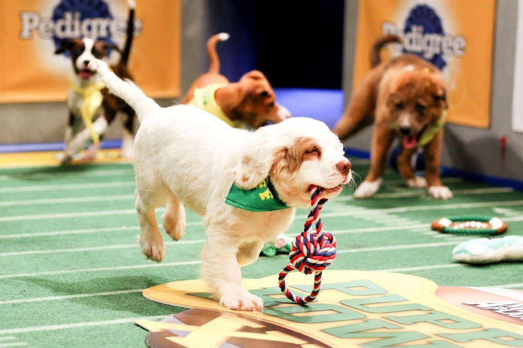 Animal Planet's 'Puppy Bowl XI' top dog in cable on Sunday