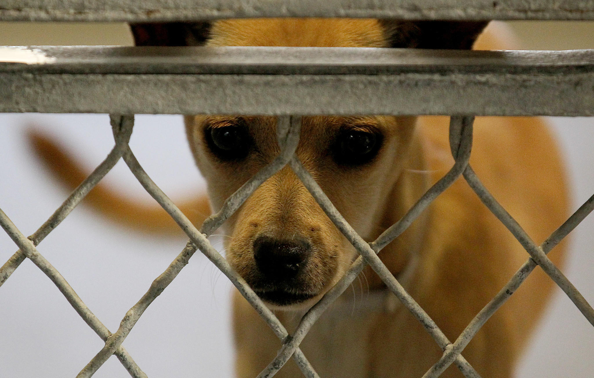 animal shelters near me open today free image