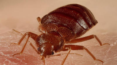 Towson court open after bed bugs prompt brief closure
