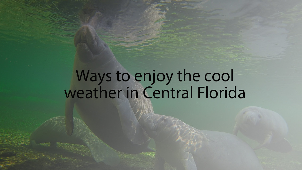 Pictures ways to enjoy cool weather in central florida for Florida cool