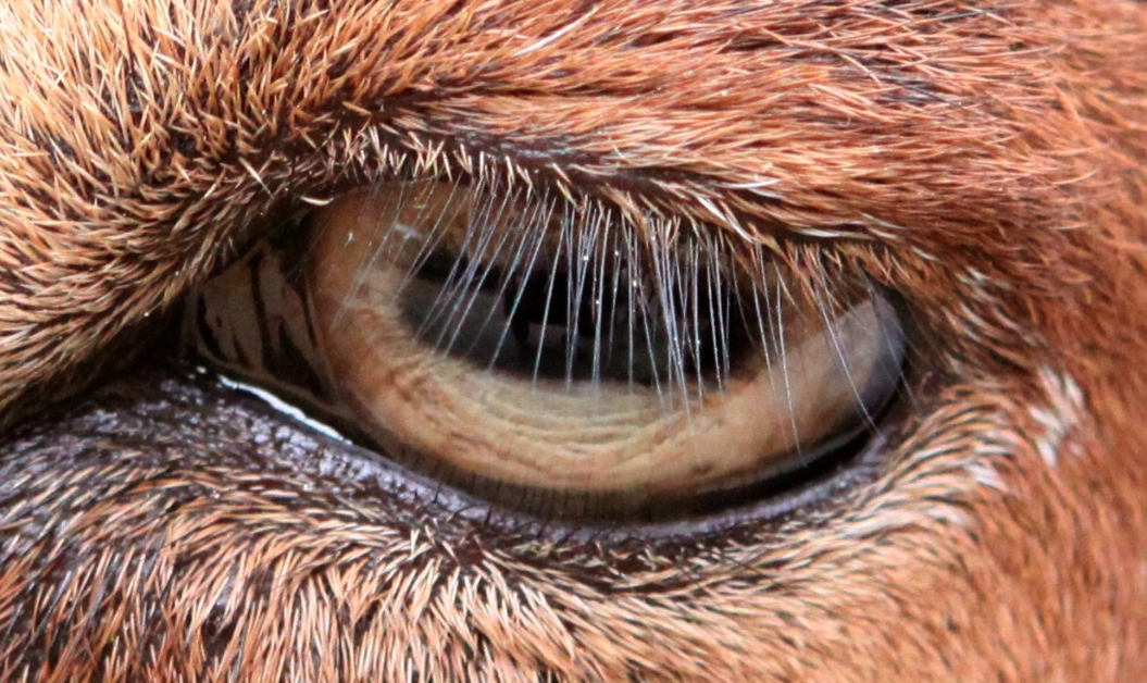 Scientists reveal the real reason you have eyelashes
