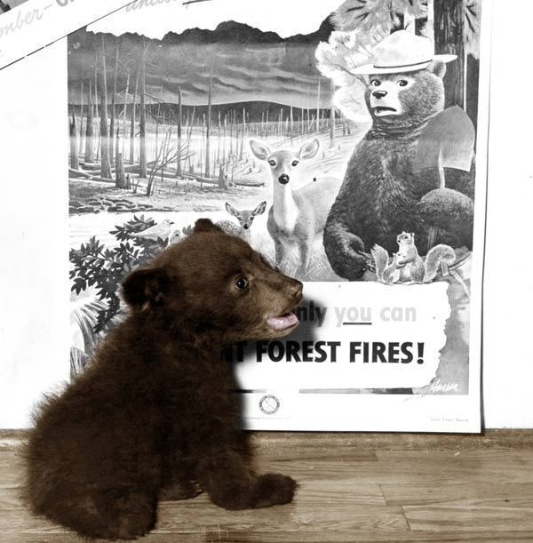 smokey bear was real author from boca pens tale of real life cub