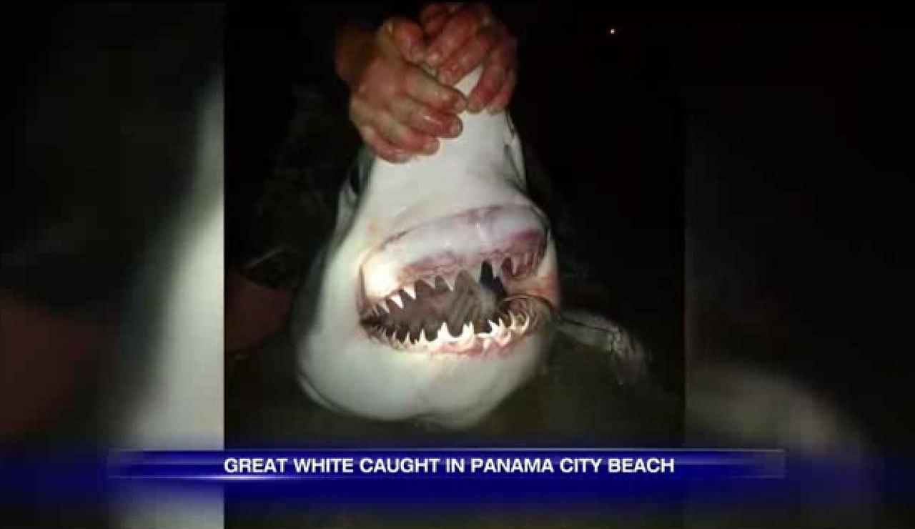Best Charter Fishing Myrtle Beach Sc New Shark Charters With Capt Jordan Pate