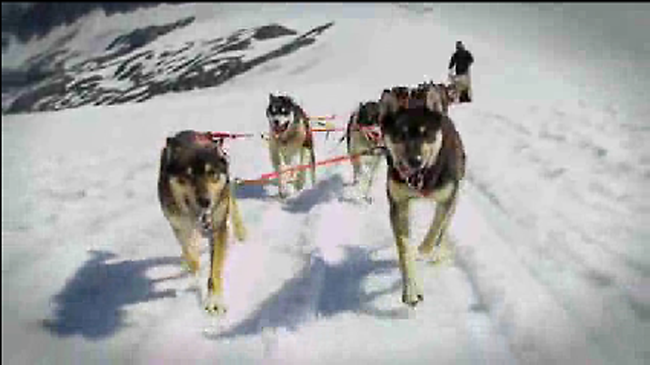 an overview of the idatarod dogsled race in alaska The race pits man and animal against nature, against wild alaska at her best and as each mile is covered, it is a tribute to alaska's history and the role the sled dog' played the iditarod is a tie to that colorful past.