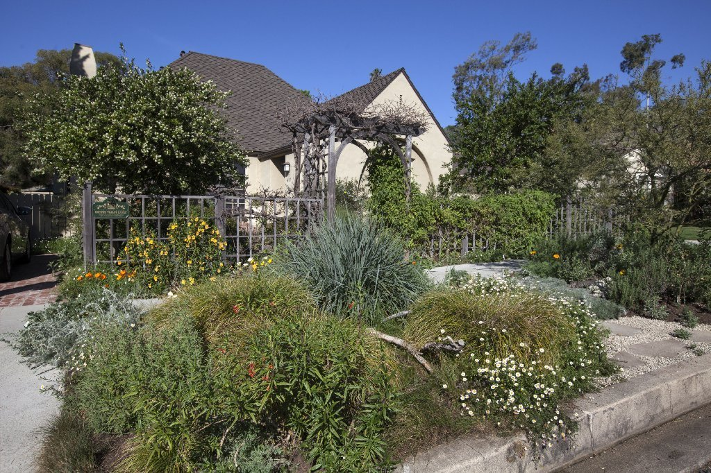 Yard on Theodore Payne tour blooms with native plants, trees, memories