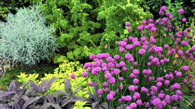 Garden Design: Garden Design With How To Plant An Outdoor Potted